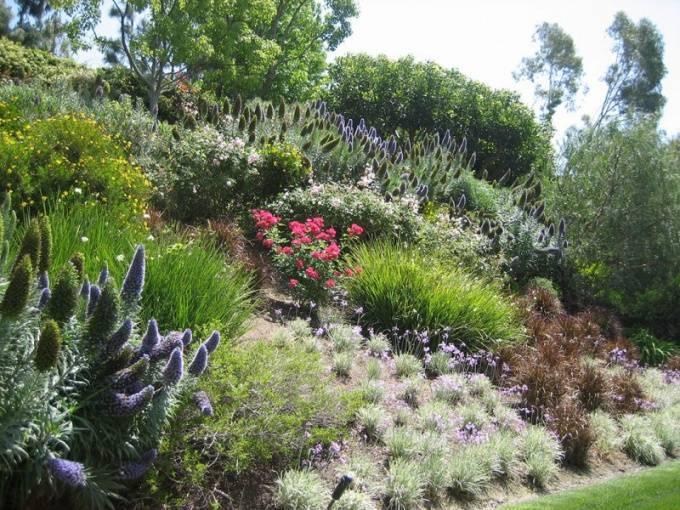 Растения на склоне