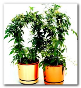 Тенелюбивые и теневыносливые комнатные растения: виды и описание
