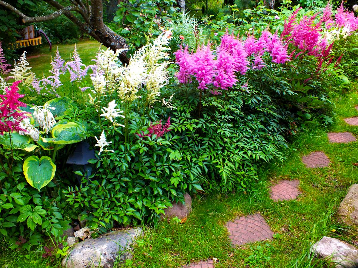 Топ-8 лучших почвопокровных многолетних растений для оформления сада