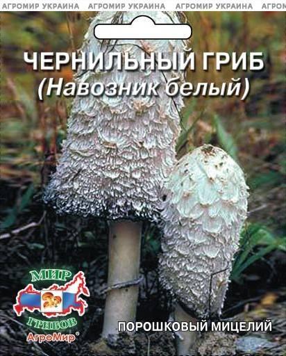 Навозник серый — гриб-чернила,  удивительный представитель лесного царства!
