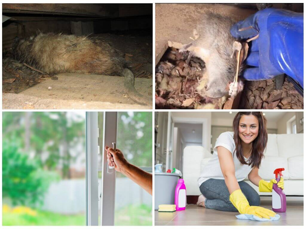 Как избавиться от запаха дохлой мыши под полом