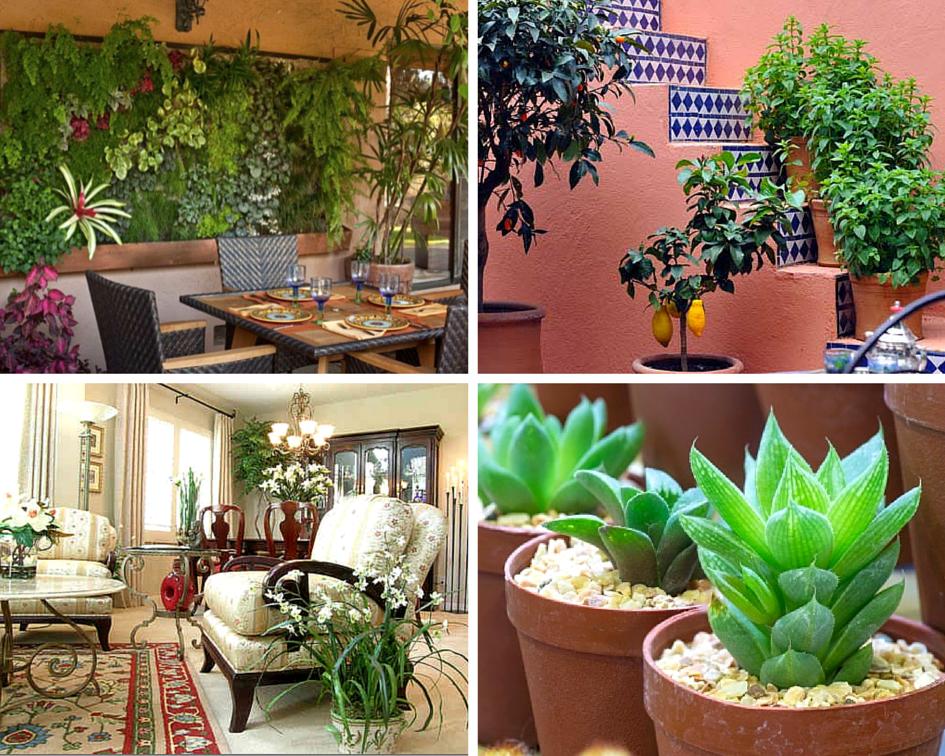 чаще какие комнатные растения полезно держать дома фото внимание зиме