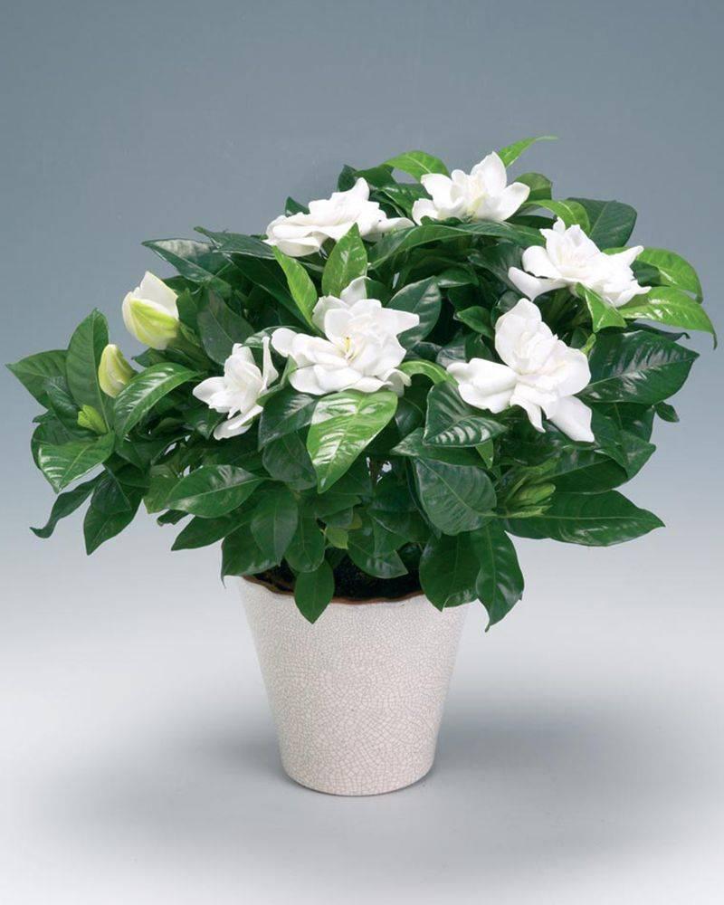 Цветы в интерьере: варианты стильных композиций и приемов размещения