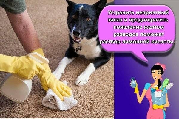 Чем помыть собаку чтобы не пахло псиной: что сделать чтобы собака не воняла