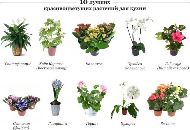 Названия комнатных цветов и их картинки