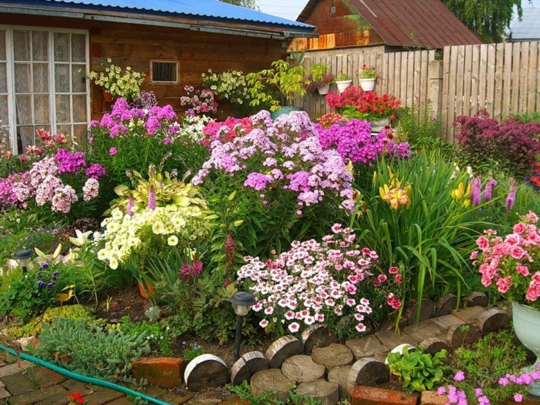 Однолетние и многолетние почвопокровники: каталог цветов и растений — их названия и фото