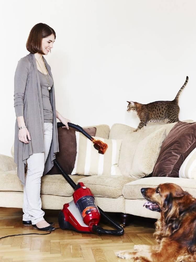 Пылесос для уборки шерсти домашних животных: как выбрать насадки на пылесос для вычесывания собак и сбора собачьей и кошачьей шерсти? рейтинг лучших мощных моделей для квартиры