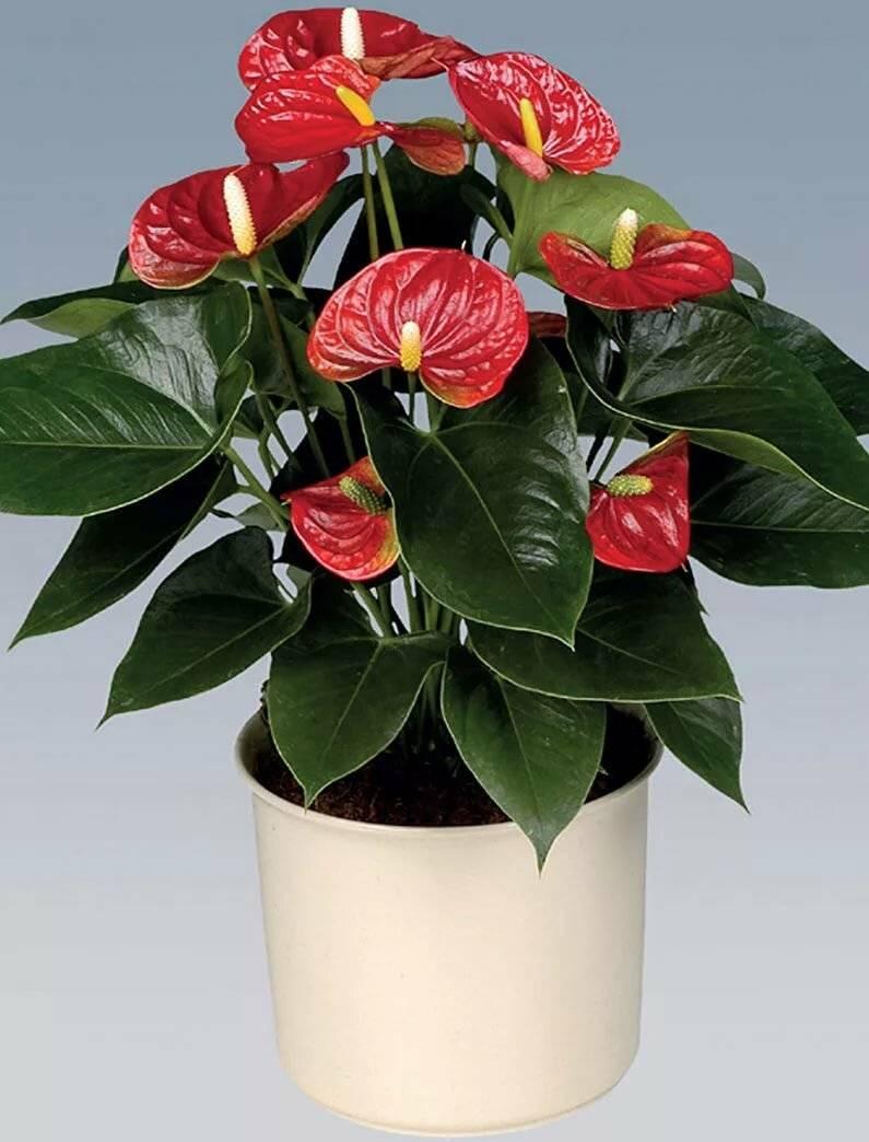 восточные красавицы цветок женское и мужское счастье фото очень либеральный ближневосточным