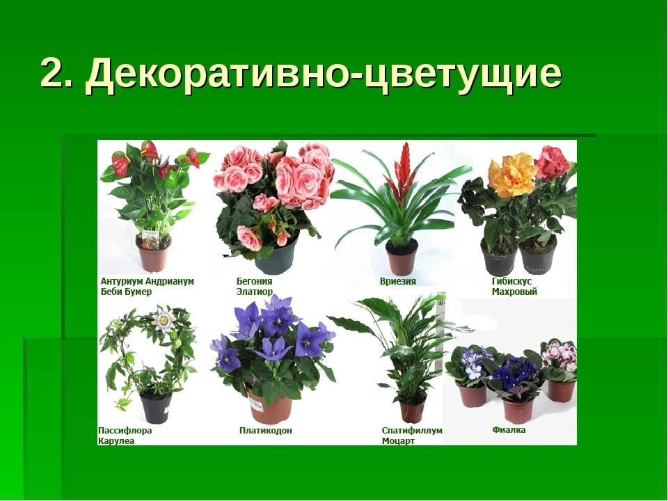 это плакат, комнатные растения с картинками и названиями нас