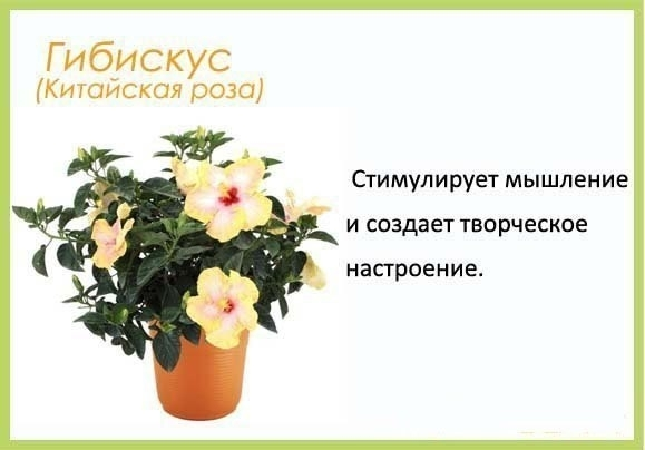 полезные советы про цветы с картинками захвата его