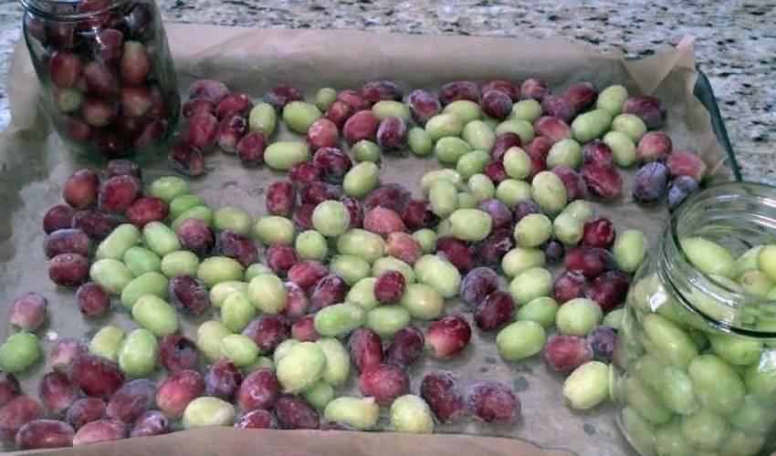 Как хранить зимой виноградные чубуки. как сохранить черенки винограда зимой до весны
