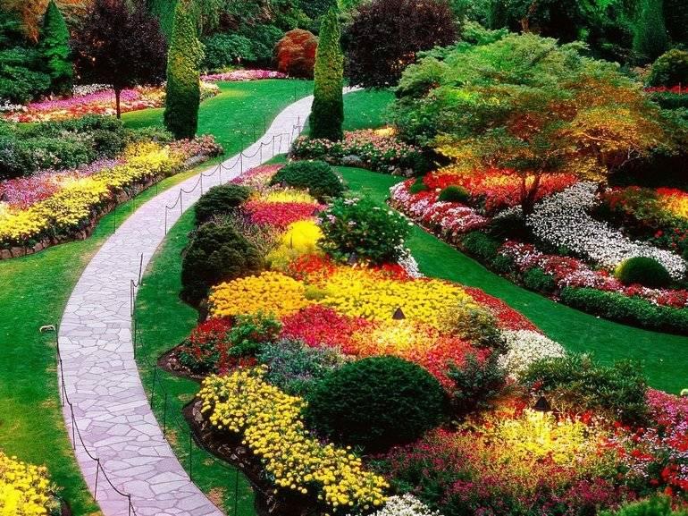 Прекрасная астильба в дизайне сада: советы по посадке и указания по уходу
