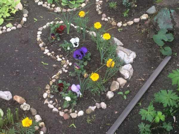 Виды почвопокровных растений для альпийской горки