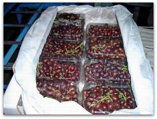 Как хранить виноград зимой (в холодильнике, морозилке, подвале)