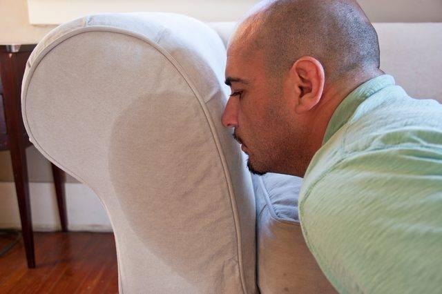 Топ 15 методов и средств, как быстро убрать с дивана запах пива