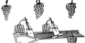 Способы и особенности хранения винограда