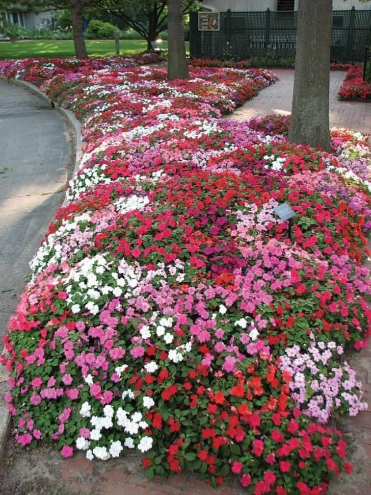 Топ-20 цветущих все лето почвопокровных многолетников для сада