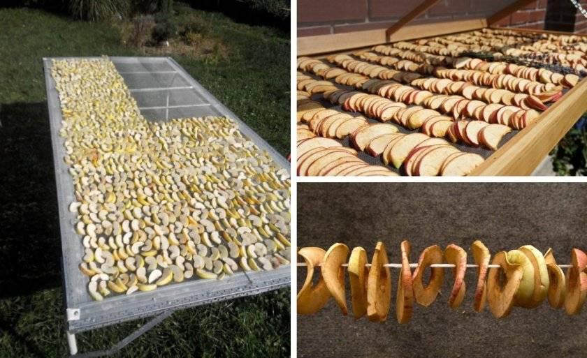 Где и как правильно хранить сушеные яблоки в домашних условиях