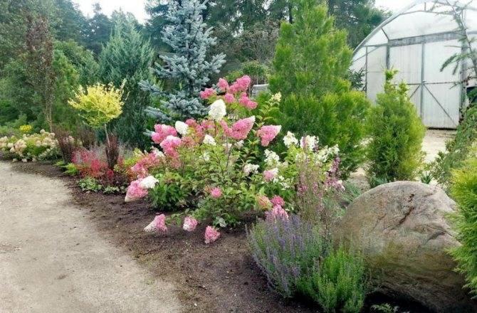 Хосты в саду: особенности выращивание и правила сочетания с другими цветами на клумбах