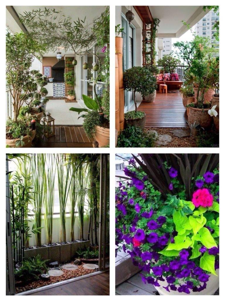 Фото какие цветы посадить на южном балконе