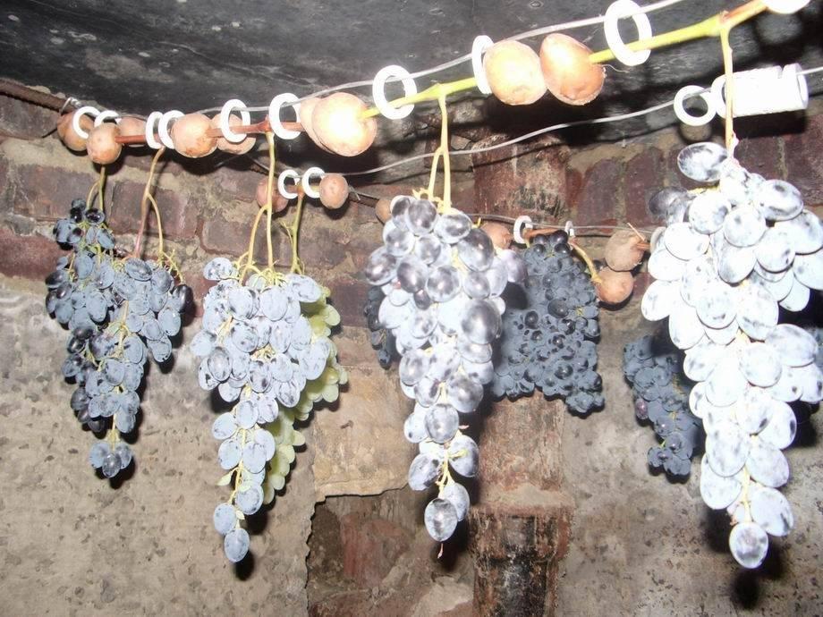 Как сохранить виноград в холодильнике подольше
