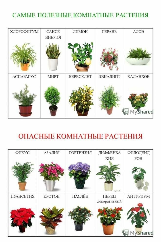 принятии картинка и названия комнатных растений и цветов в интернет магазине любимое многими