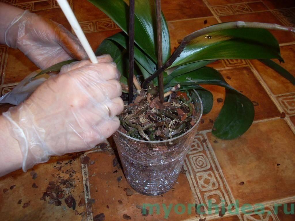 картинки орхидеи уход и размножение в домашних условиях фото автоматически проверяет всех