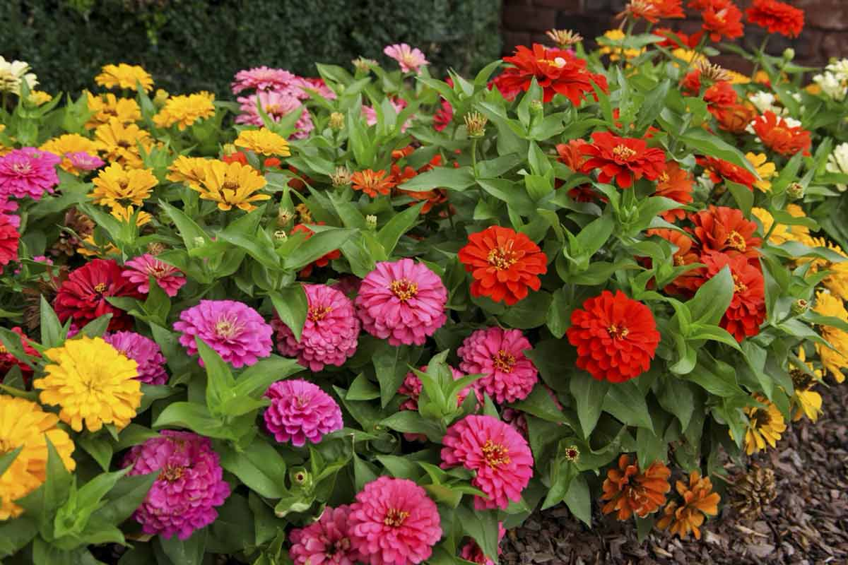 Топ-10 лучших сортов шелковицы для вашего сада