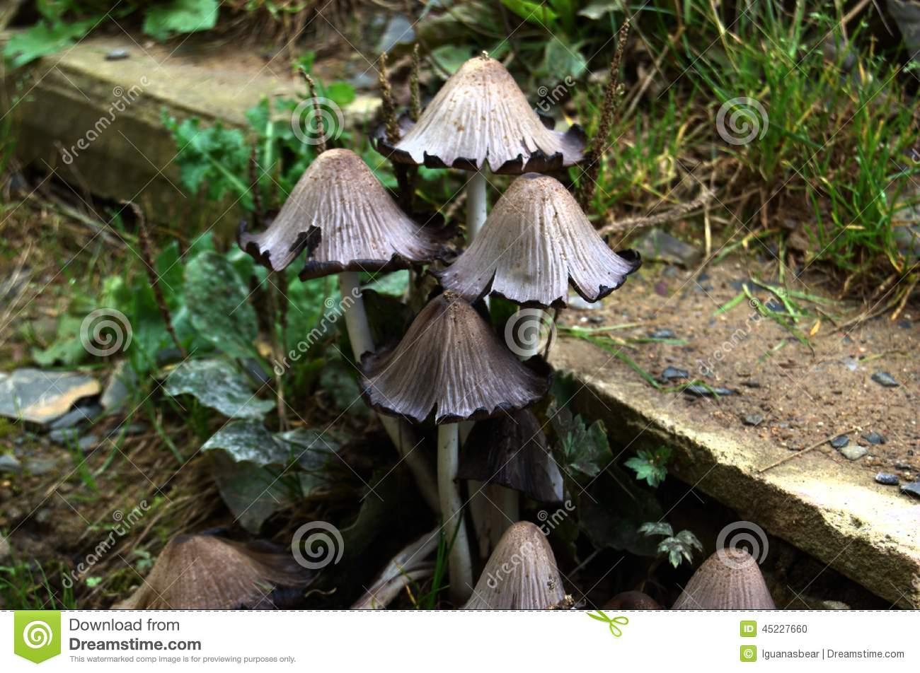 Какие бывают серые грибы: разновидности, описание и фото