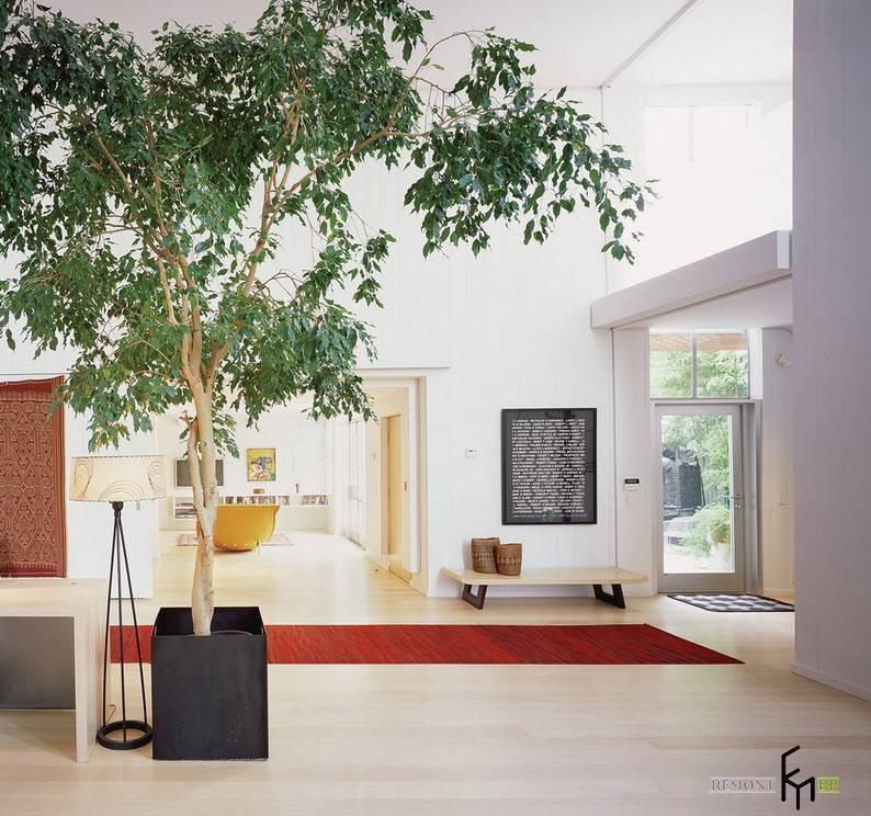 Какие комнатные растения обязательно должны быть в доме