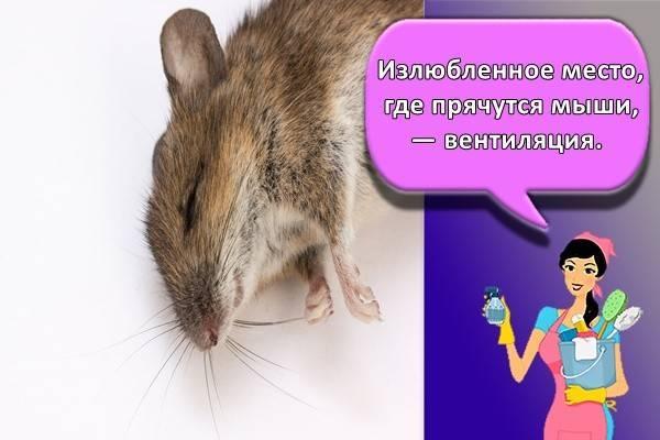 Сдохла крыса под полом, как избавиться от запаха