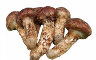 Гриб мацутакэ — сравним с ценой за трюфель, обязательно к прочтению