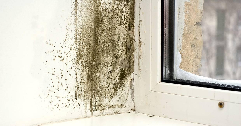 Дома завелся запах плесени: как его убрать бесследно и навеки