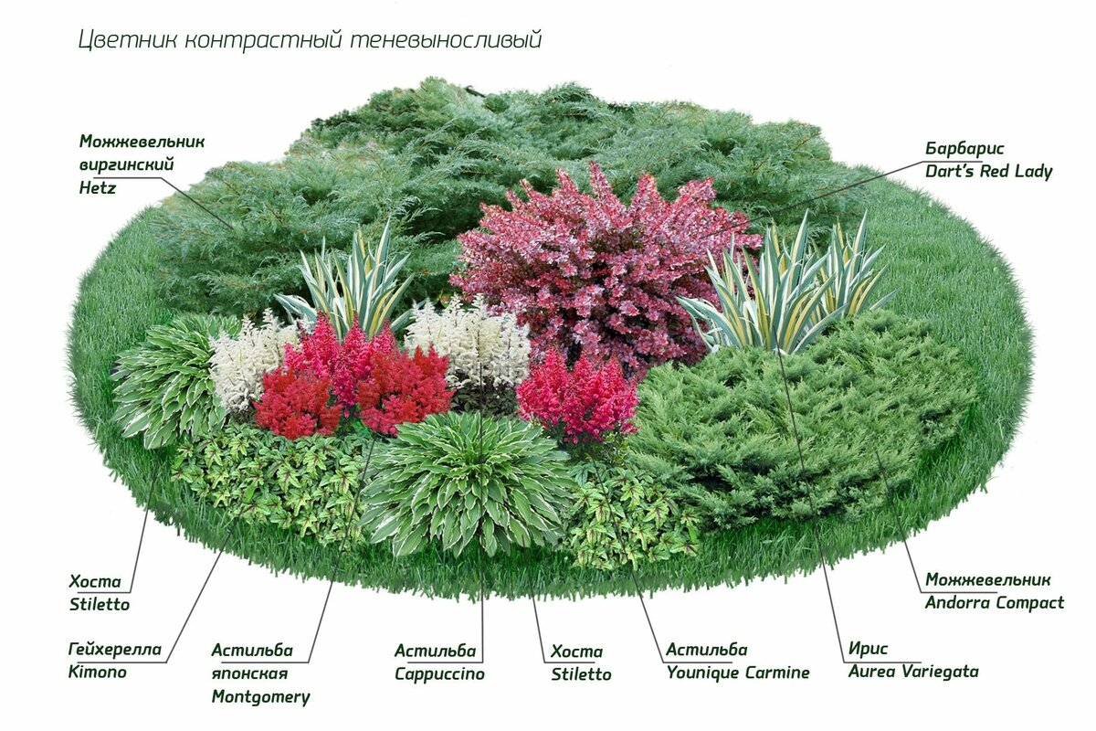 благодаря картинки цветов для клумб с названиями полагают, что подобным