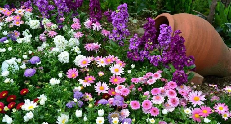 Цветущие почвопокровные растения для сада: названия и фото популярных