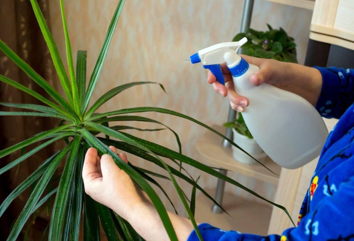 комнатные растения в картинках температура полив опрыскивание зелень