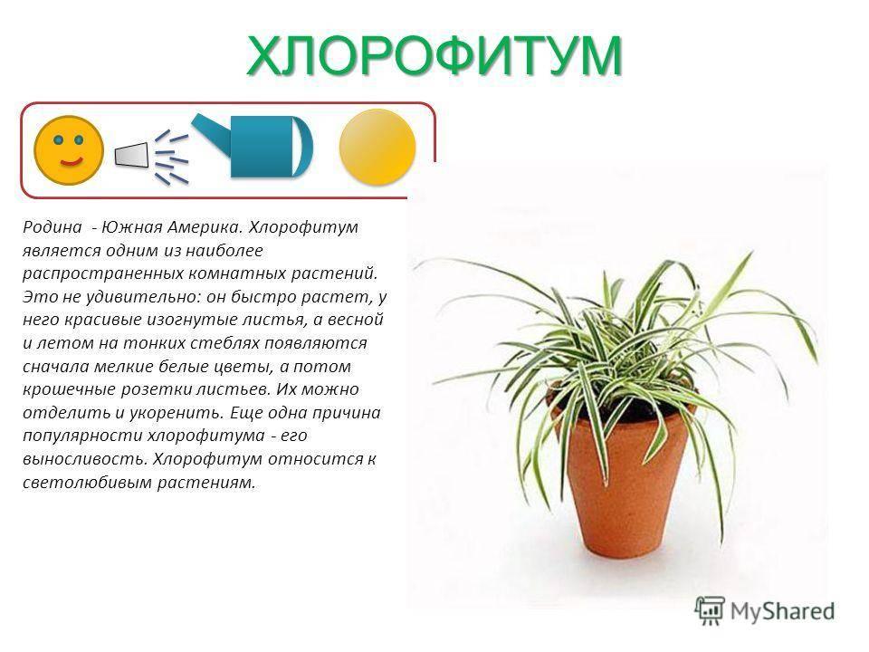 Комнатные растения уход за ними в картинках