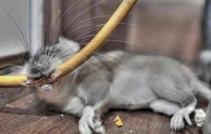 Какими способами можно избавиться от мышиного запаха