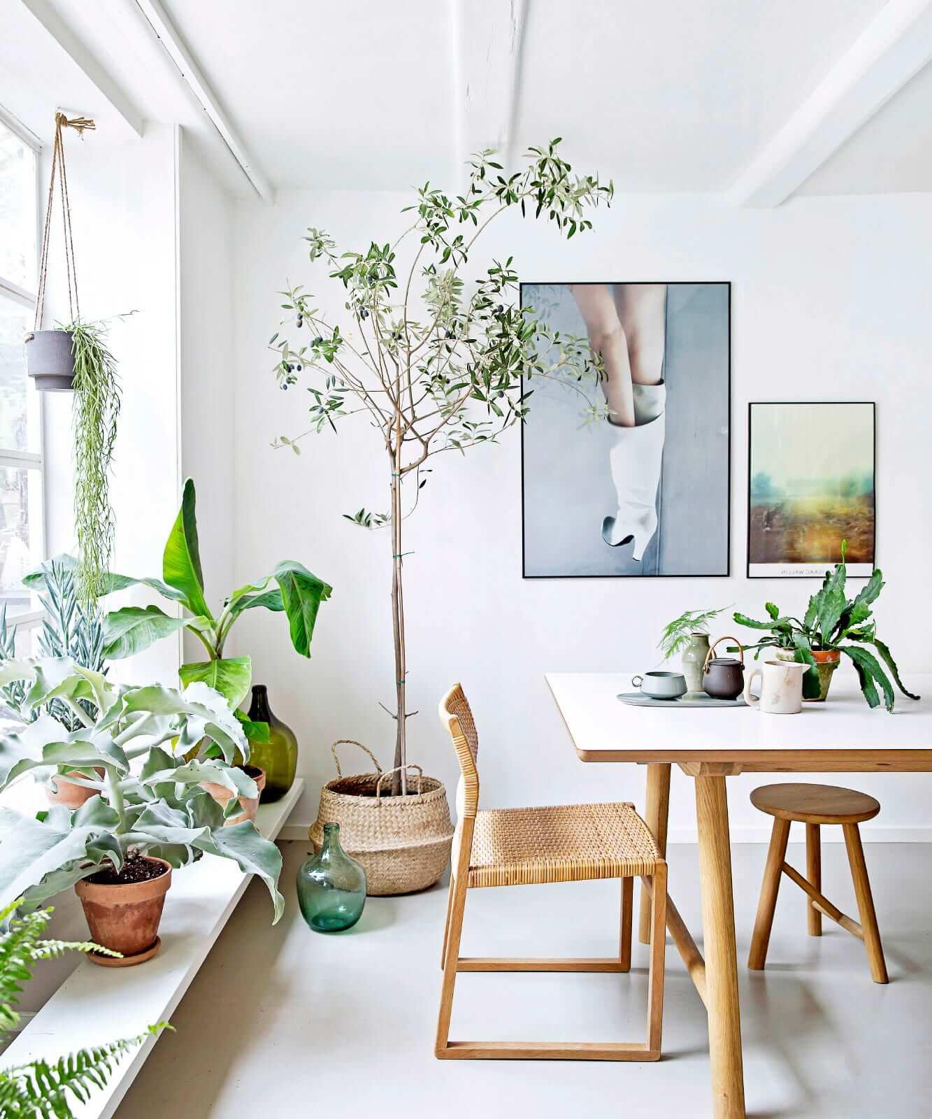 Напольные комнатные растения