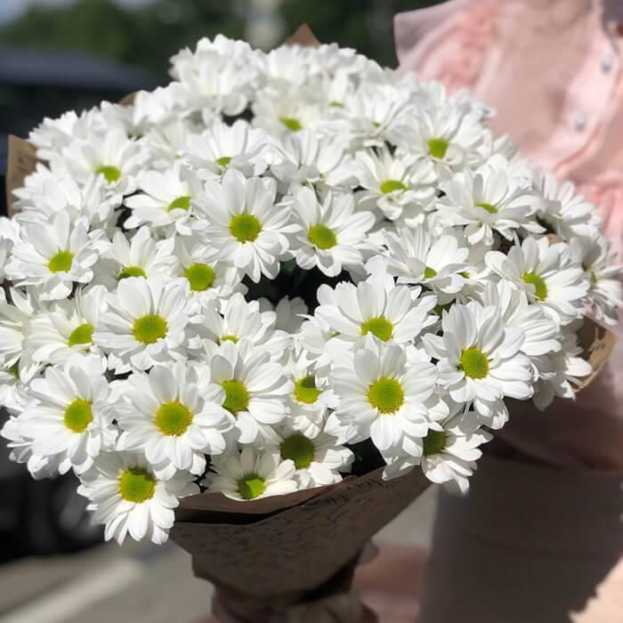 ромашковидные хризантемы фото найдете фото