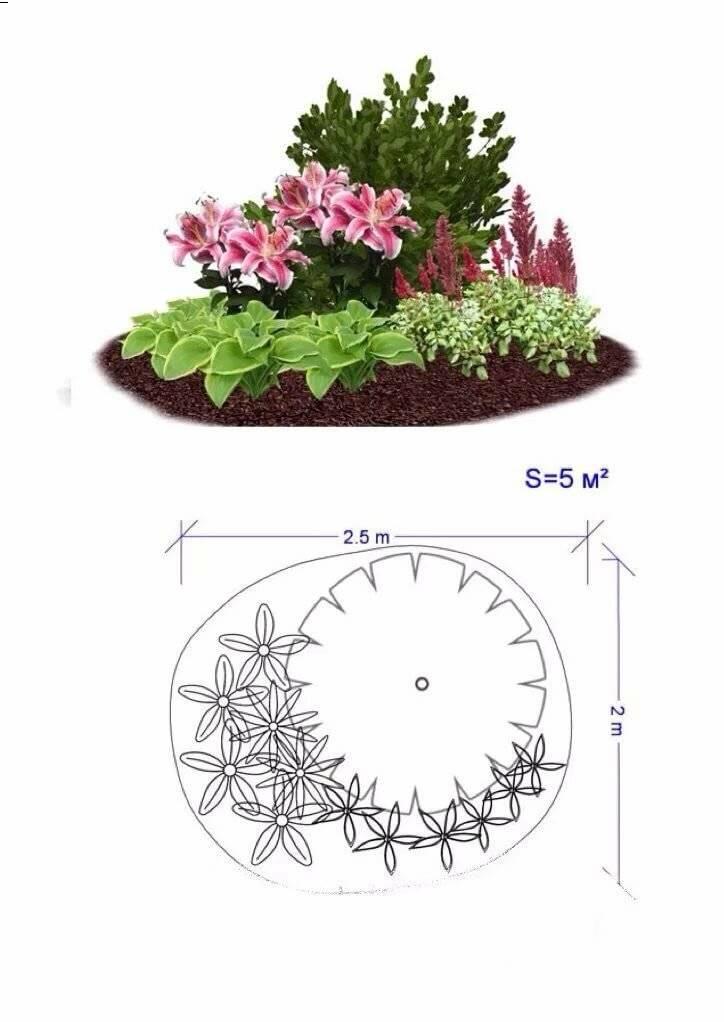 схемы цветников для начинающих фото аквапарк это