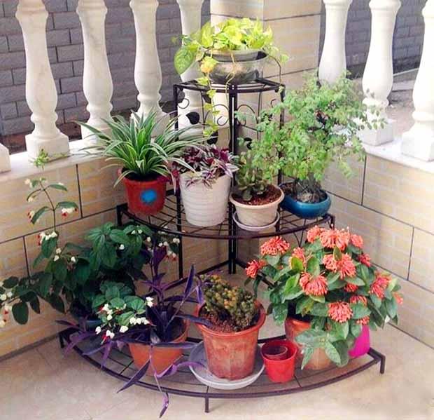 Комнатные растения для гостиной | топ-15 живых украшений с пользой для здоровья | (фото & видео)