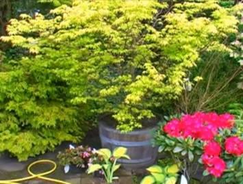 Особенности выращивания деревьев и кустарников в контейнерах