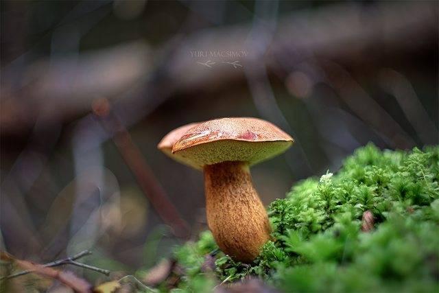 Все древесные грибы в одной подборке