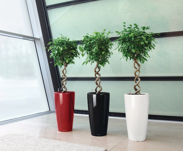 Большие комнатные растения