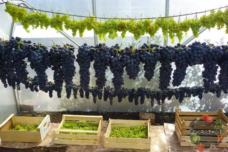 Как хранить виноградные листья для долмы на зиму