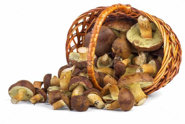Что вы знаете о курином грибе? интересные факты и проверенные рецепты!