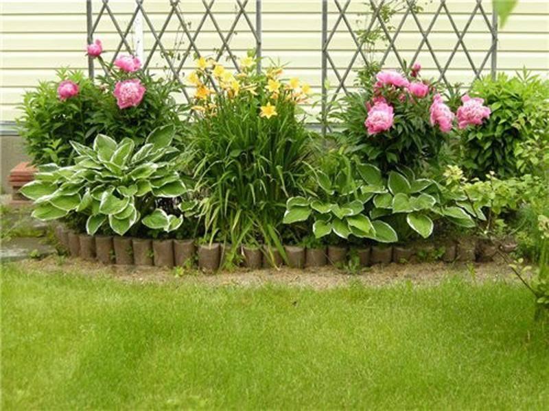 Флоксы на клумбе в саду