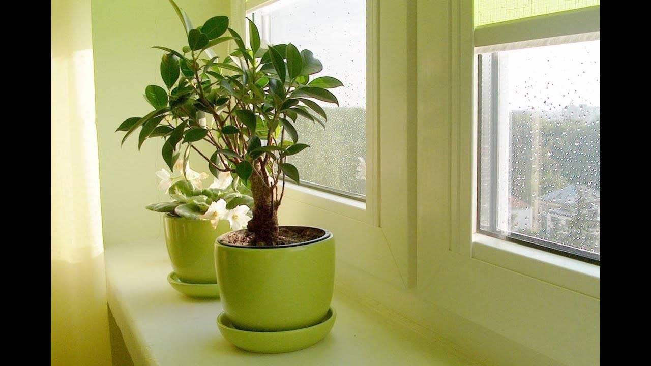 Домашние цветущие растения