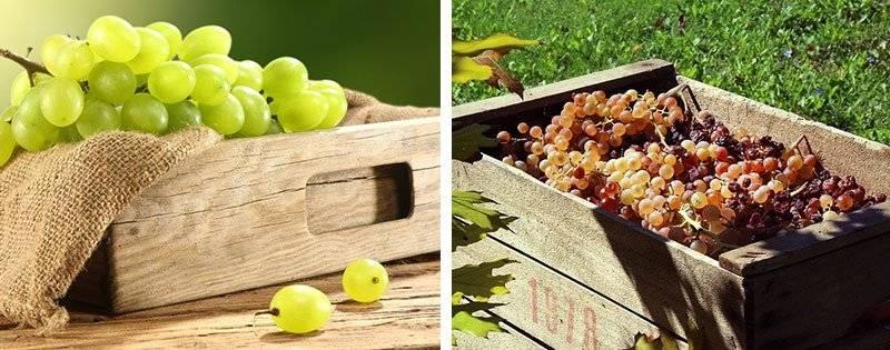 Как сохранить виноград до нового года в домашних условиях - в квартире, в доме: советы
